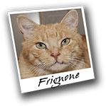 frignone